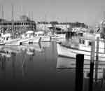 Fisherman's Wharf today.